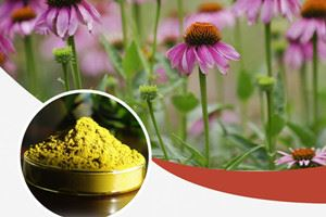 Echinacea Extract Sale - March Only